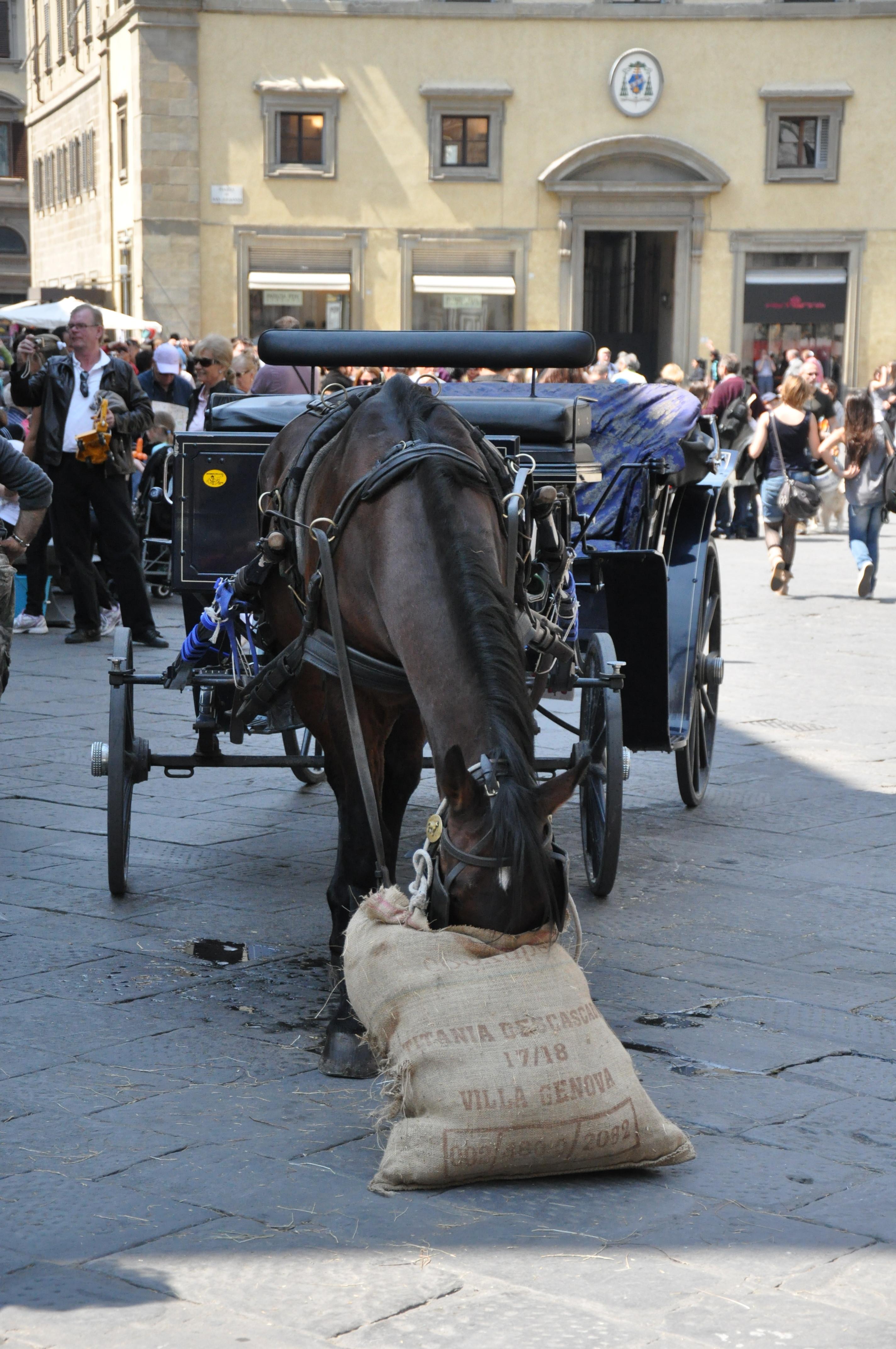 Флорентийский конь