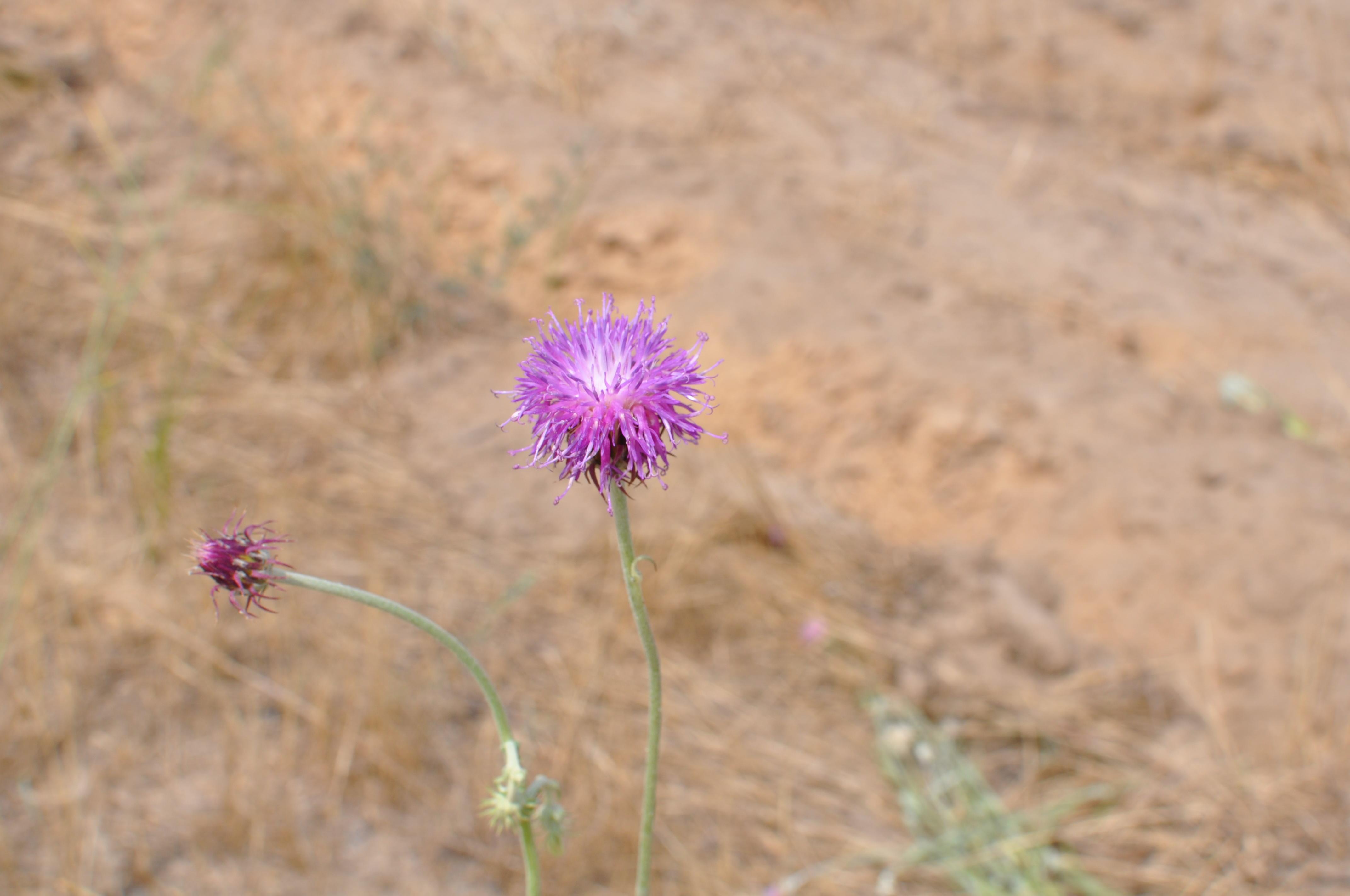 Кинбурнская коса