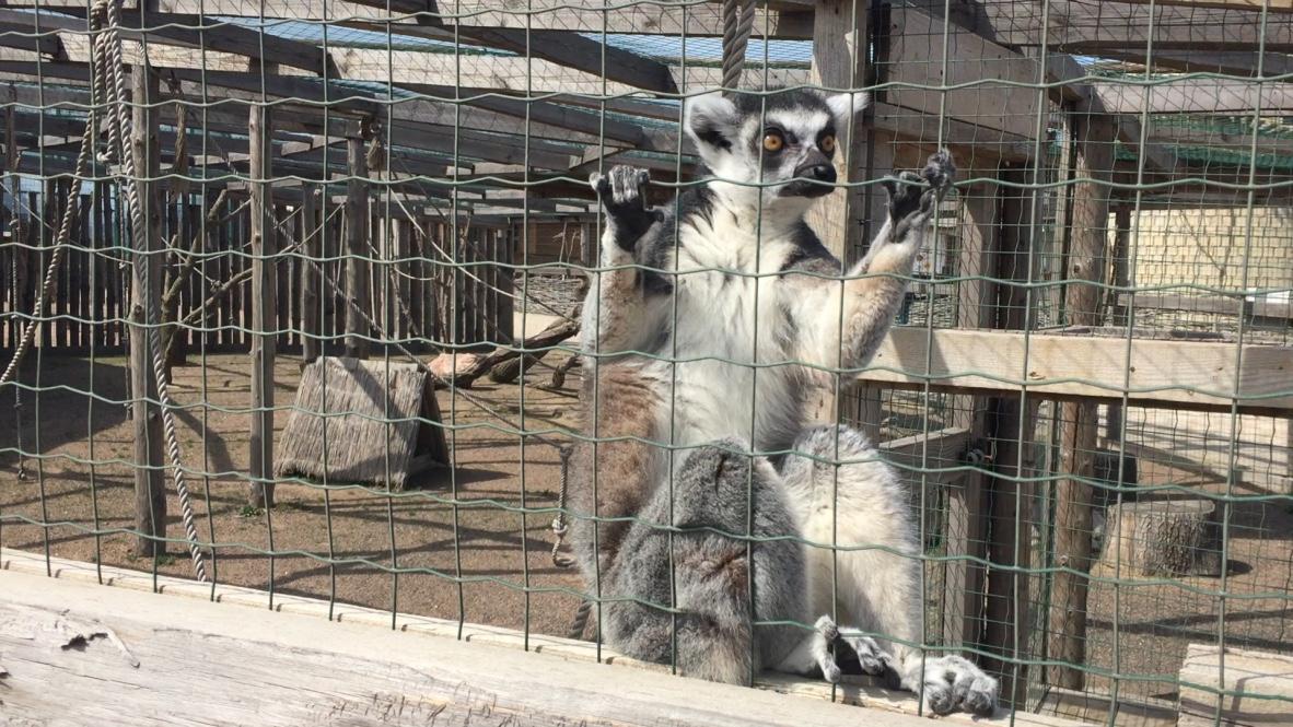 Биопарк Зоопарк в Одессе