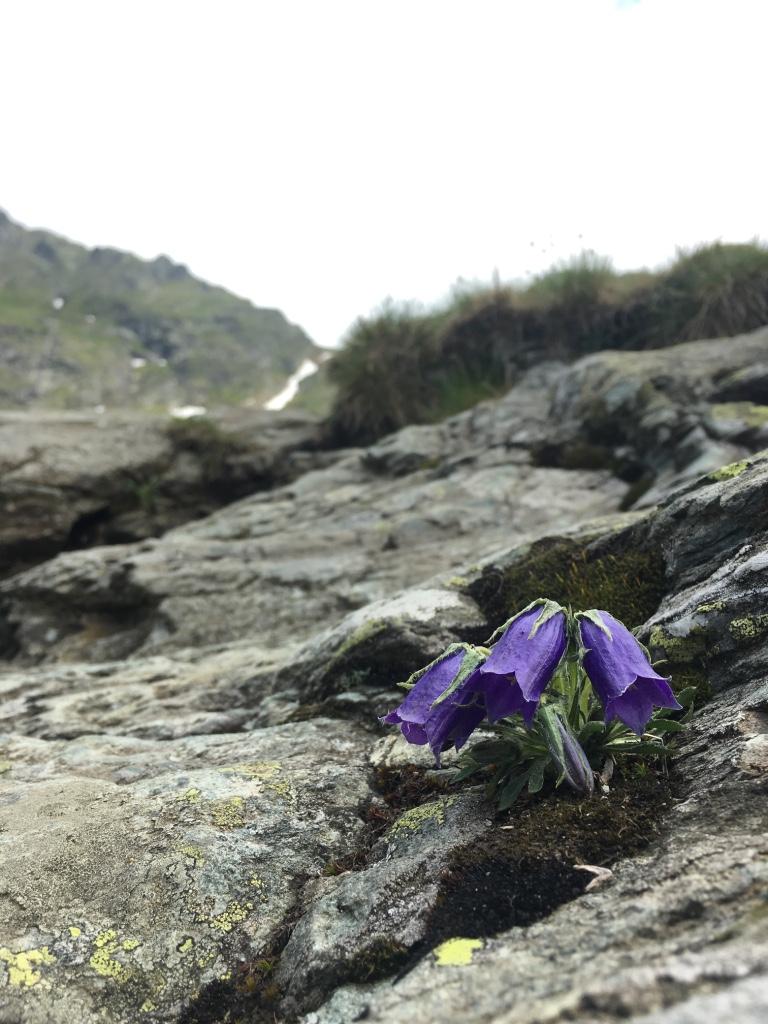 весна в Румынии
