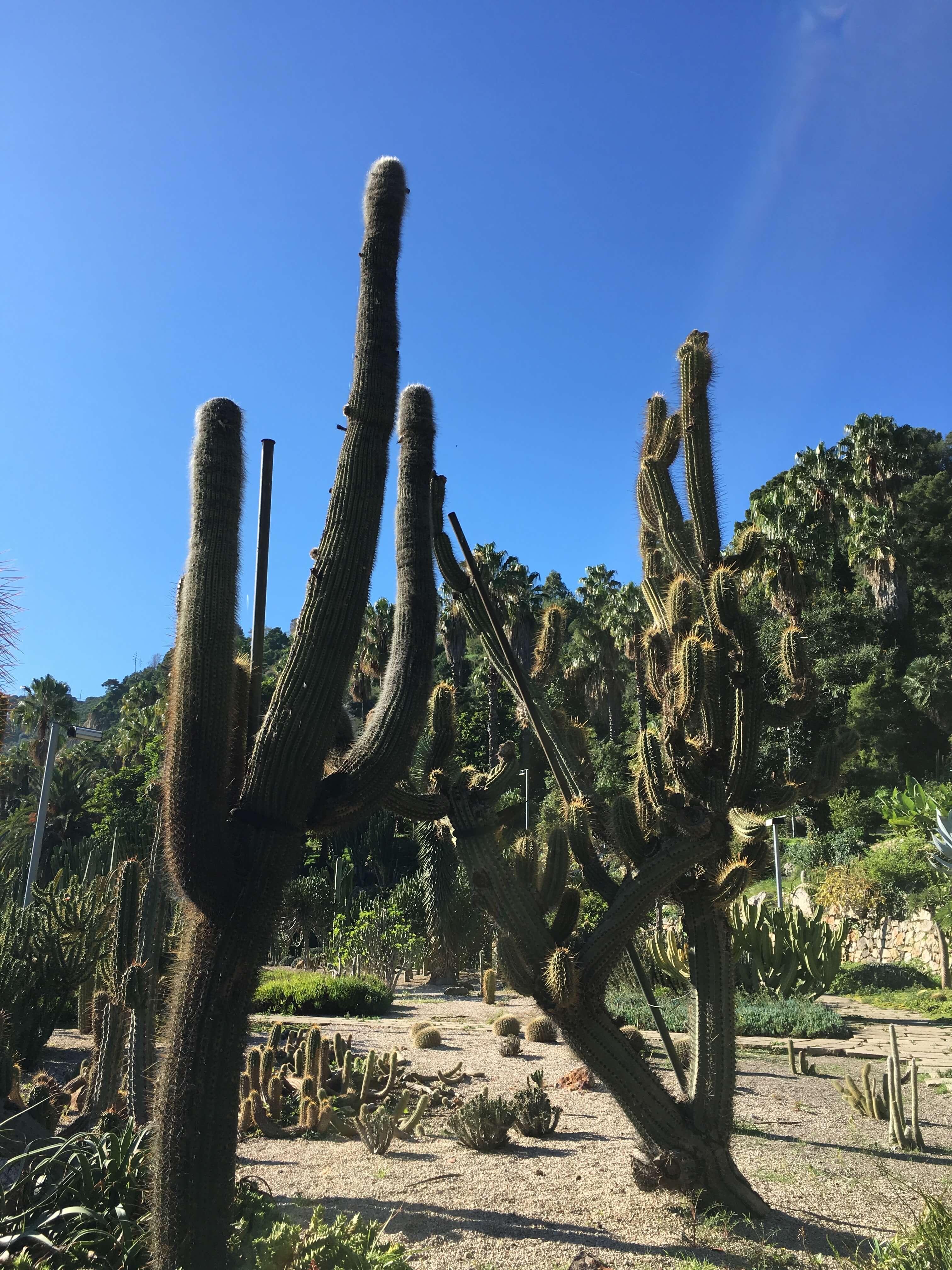 Парк кактусов Jardins de Mossen Costa i Llobera