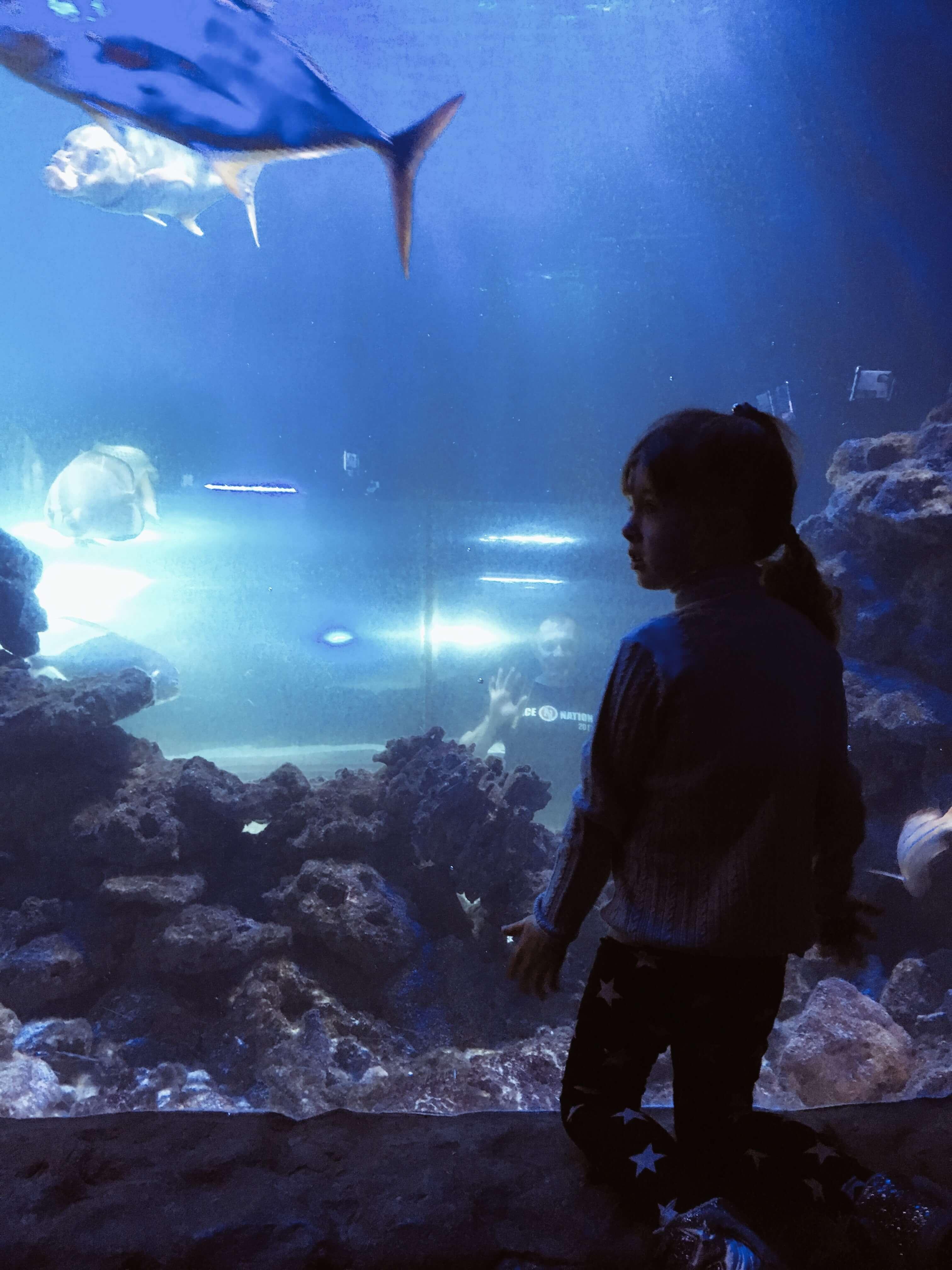 Океанариум в Киеве