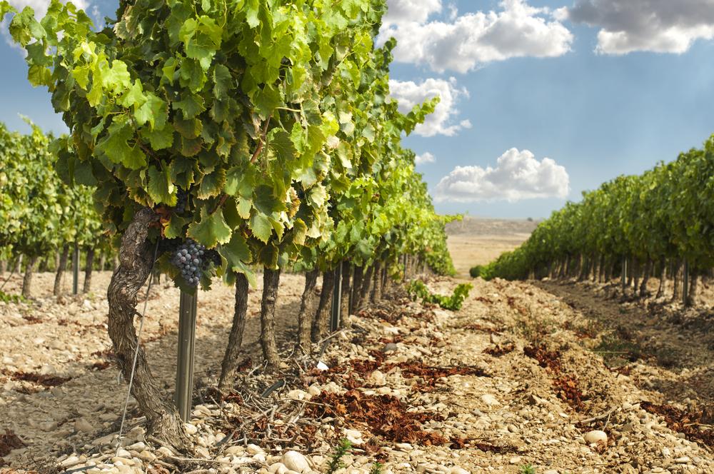 Винодельни Украины: где делают вино в Николаеве и области?