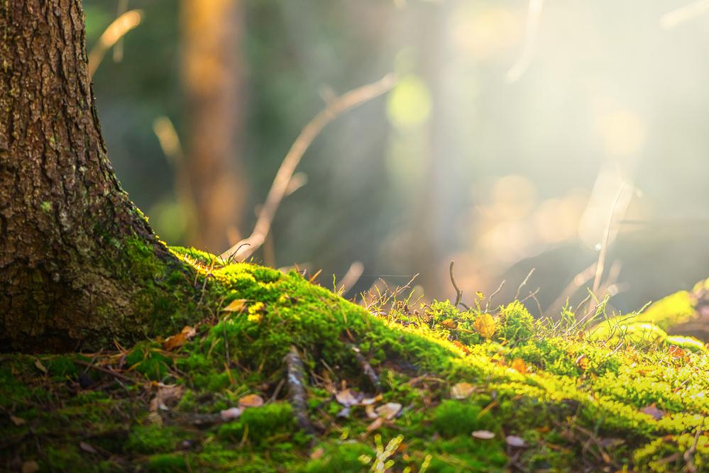 Ландшафтный заказник государственного значения «Савранский лес»