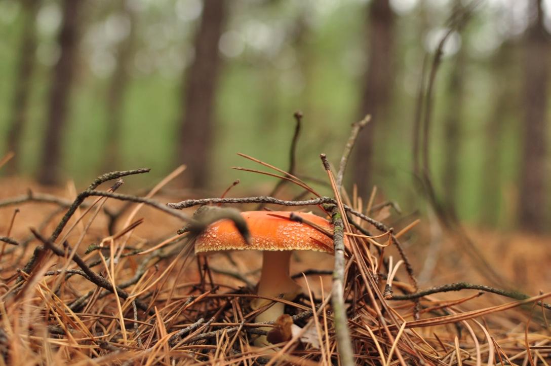 Савранский лес