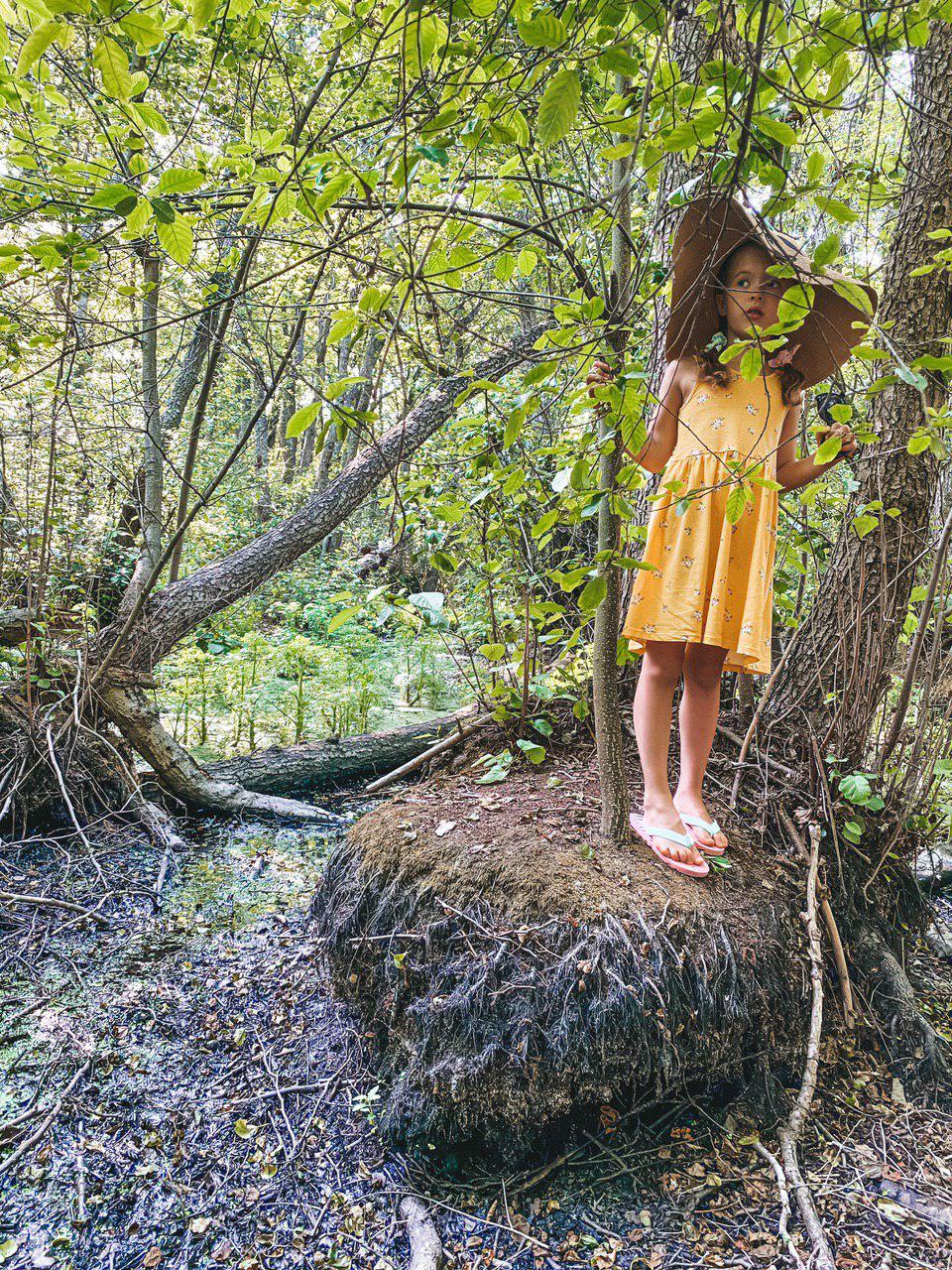 ковалевская сага, геродотов лес